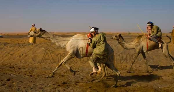 Thrills and Spills in Camel Racing