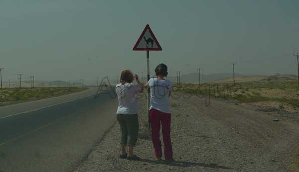 Beware Camels sign on an Omani road