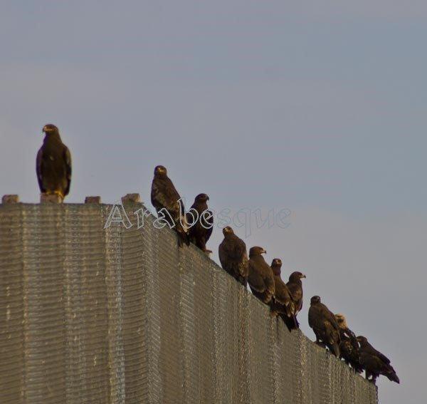 10 Eagles Salalah Oman