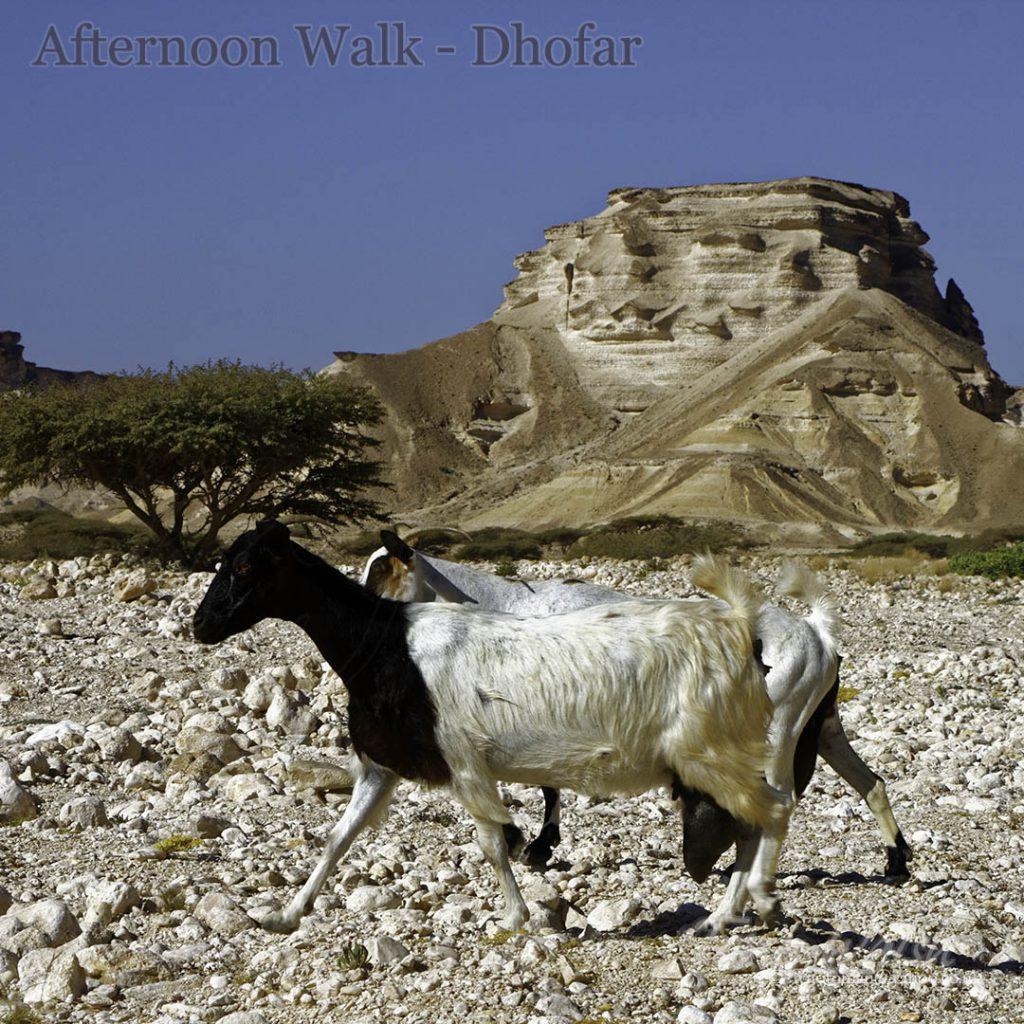 Afternoon Walk Dhofar