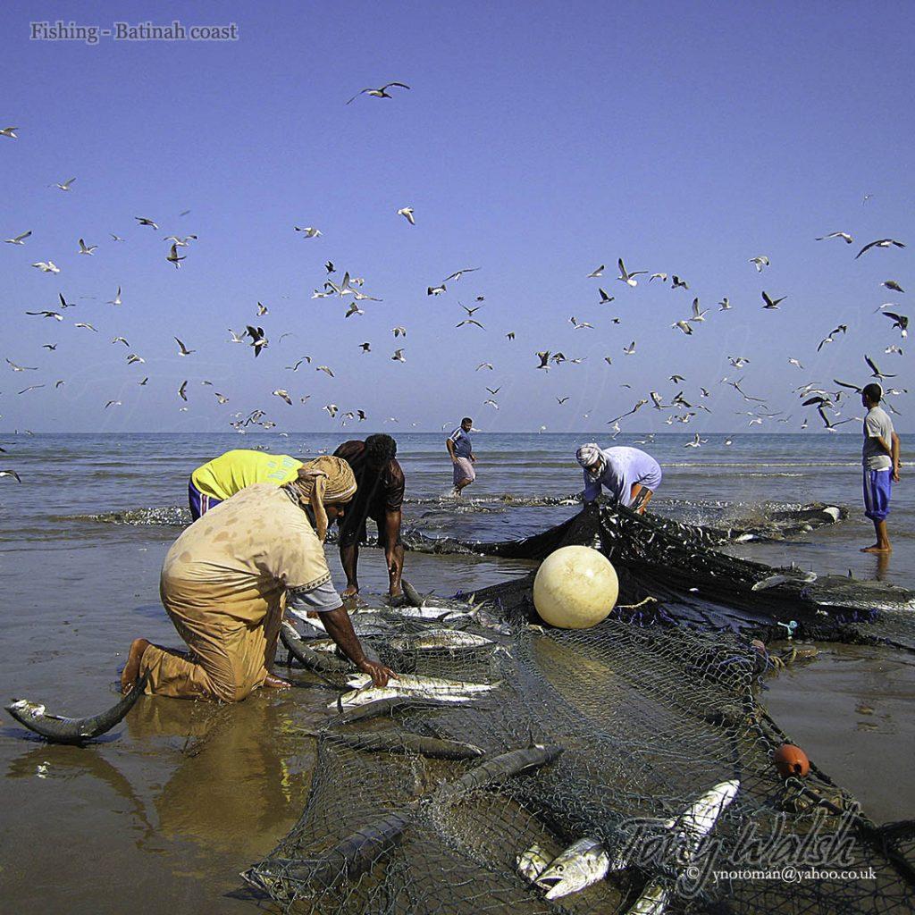 Fishing Batinah Oman