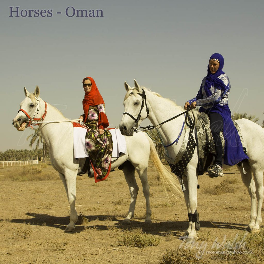 Horses Oman