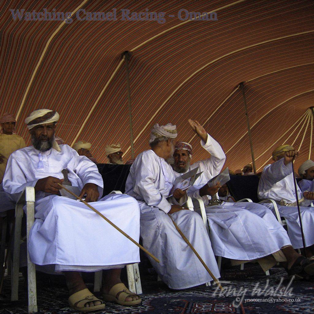 Watching Camel Racing Oman