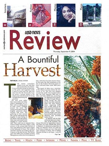Date Harvest in Oman