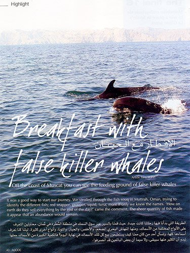 Whale watching in Oman