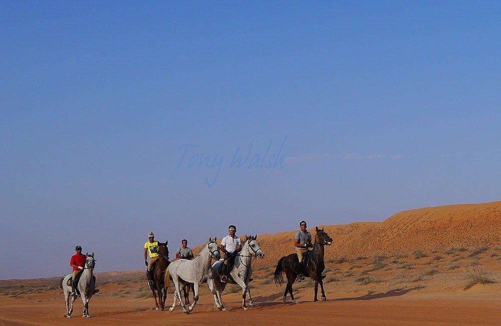 Horses in the Desert