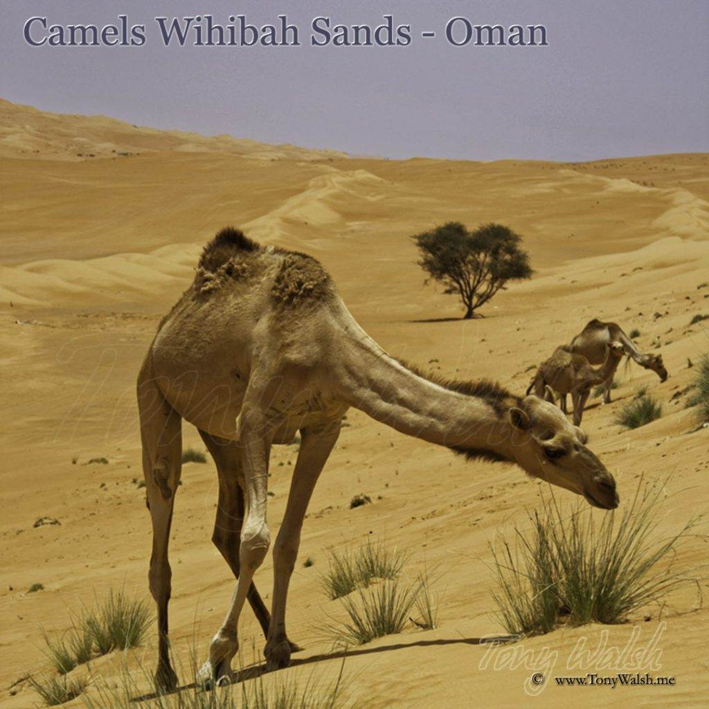 essay about tourism in oman [img] link ---- essay about tourism in oman best essay writing service essayeruditecom dma thesis examples effect of.