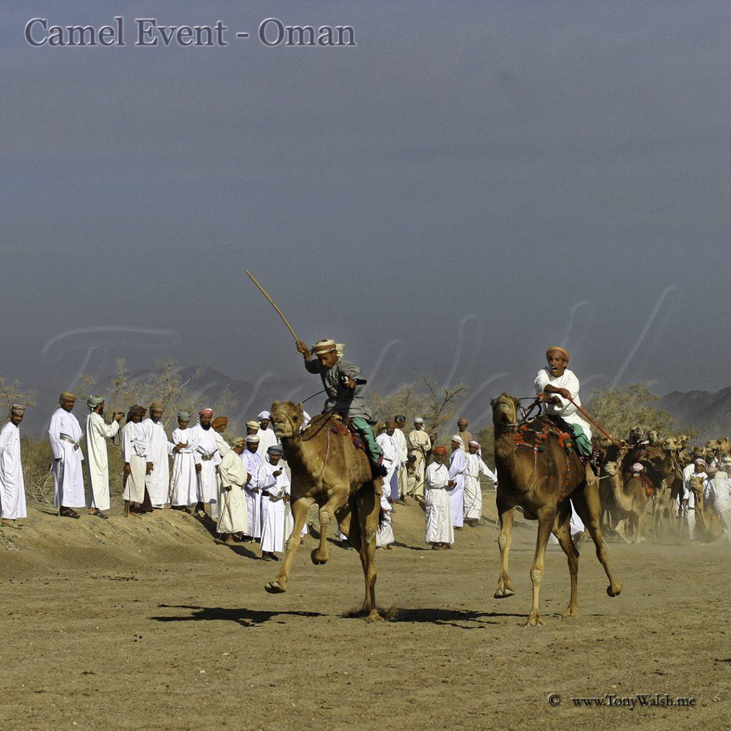Camel event Oman